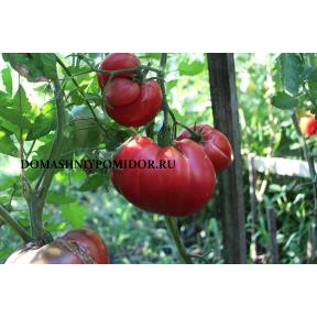 Земляника немецкая розовая ( Strawberry German Pink, США )