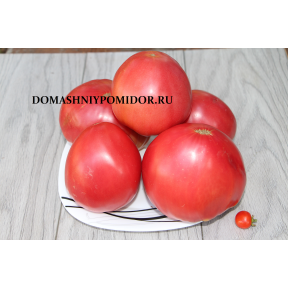 Доминго сердцевидный ( Domingo, Heart, США)