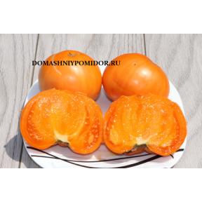 Оранжевый Шербет Амишей ( Amish Orange Sherbet, США)