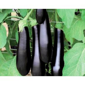 Каратая F1 семена баклажана ( Vilmorin, Франция )