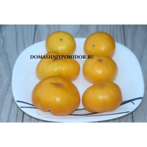 Гном Жёлтый Жасмин ( Dwarf Jasmine Yellow, США, Австралия)