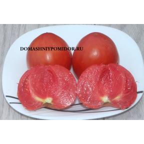 Козула 62 ( Kozula 62, Copia x Orange Strawberry, Польша)