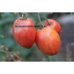 Козула 68 ( Kozula 68, Dyno x Orange Strawberry, Польша)