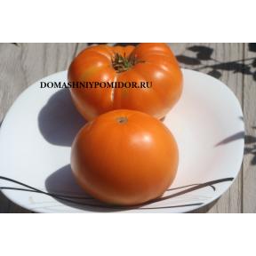 Оранжевый Мэйлор Рот ( Maylor Roth's Orange, США)
