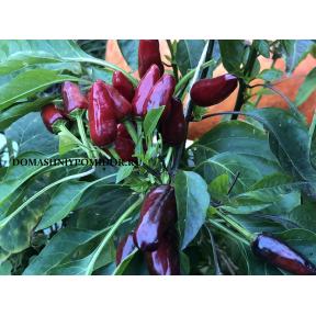 Турецкий Цветок ( Turkish Flower Biber, Канада)