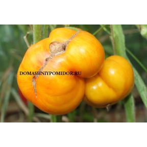 Большой Оранжевый Полосатый ( Big Orange Stripes, США)