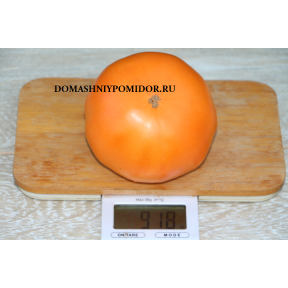 Бизон Оранжевый ( Украина)