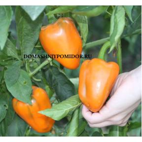 Оранжевый Коготь ( Nail Orange, США)