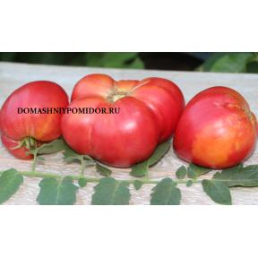 Сладкий Персик ( Sweet Peach, США)
