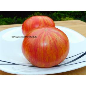 Гном Большой Оранжевый Полосатый (Dwarf Big Orange Stripe, США)