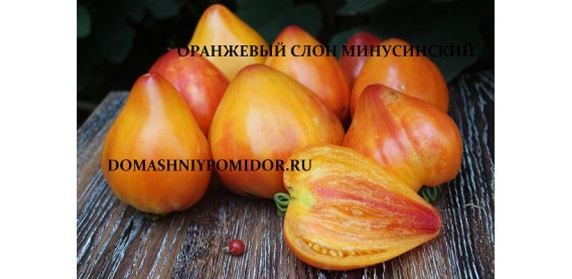 Оранжевый слон Минусинский