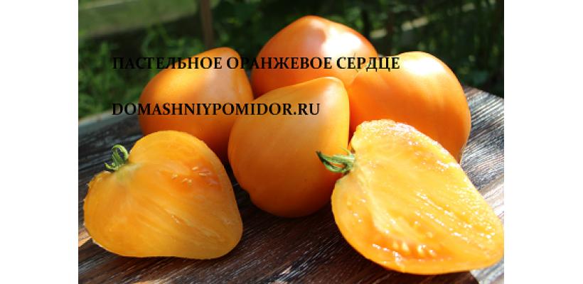 Пастельное оранжевое сердце ( Pastel Orange Heart, США)