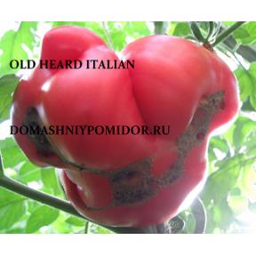 Старое сердце Италии ( Old Heart Italian, США)