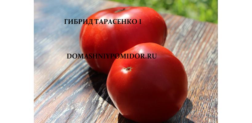 Гибрид Тарасенко 1