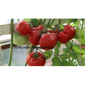 Яблочный Люкко ( Jabucar Lucko, Хорватия )