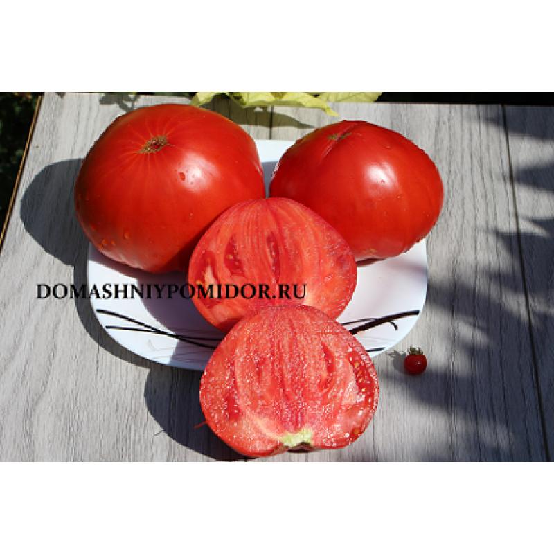 Смотреть Новые сорта томатов на 2019 год видео