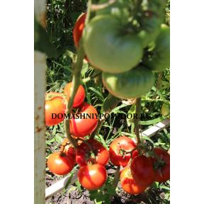 Горячо- любимый красный Болгарский ( Milka's Red Bulgarian, США)