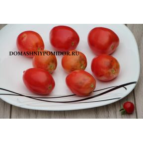Голубой томат игра цвета индиго (  Blue Tomato Indigo Gargame, Япония, США )