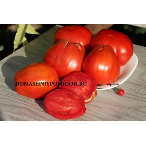 Пересеченная красная груша (Poire Rouge Franchi, США)