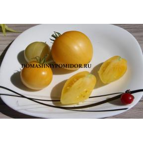 Гном Лимонный лёд ( Dwarf Lemon Ice, Австралия, США )