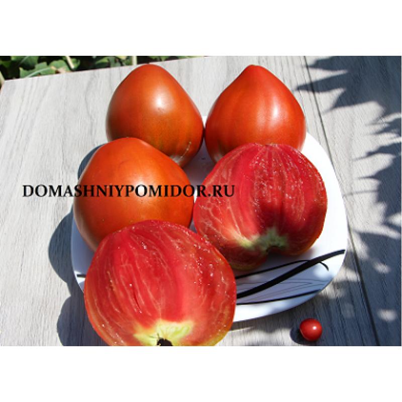 Новые сорта томатов на 2019 год изоражения