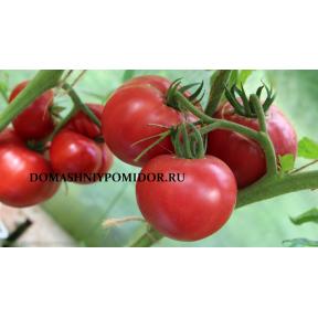 Итальянский Гринбуш ( Greenbush Italian, США)