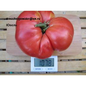 Коллекция Старинные сорта томатов
