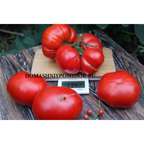 Земляника Маргариты ( Strawberry Margarita, США)