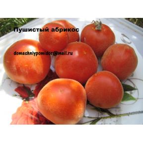 Пушистый абрикос