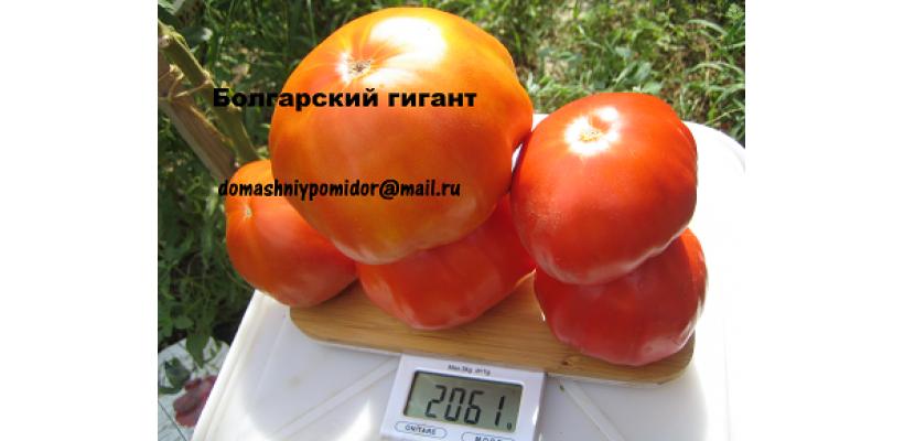 Болгарский гигант