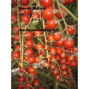 Сладкий миллион ( Sweet Million, Англия)