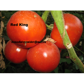 Красный Король ( Red King, Англия)