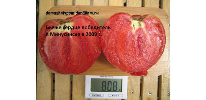 Бычье сердце победитель в Минусинске в 2009 году