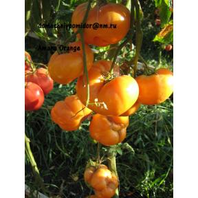 Амана Оранж