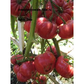 Итальянское дерево ( Italian Tree)