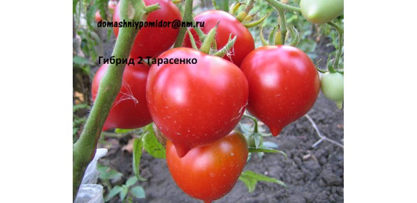 Гибрид 2 Тарасенко