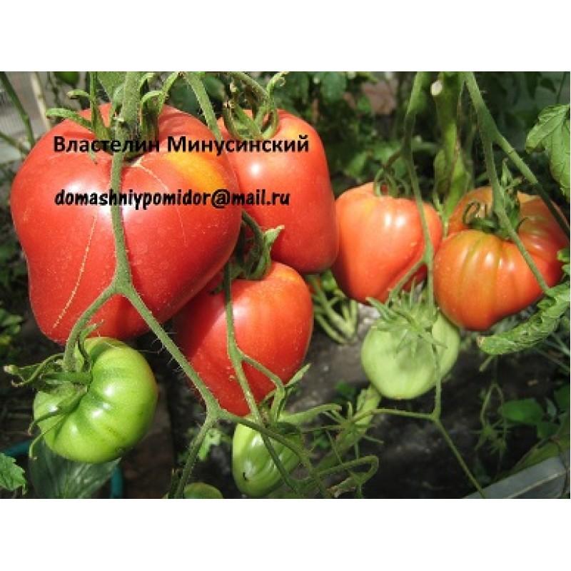 Что за сорт томатов императрица