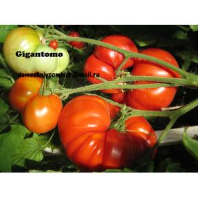Gigantomo