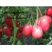 Коллекция томатов- Минусинские сорта