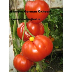Немецкое бычье сердце Гомера ( Hamer's German Oxheart, США )