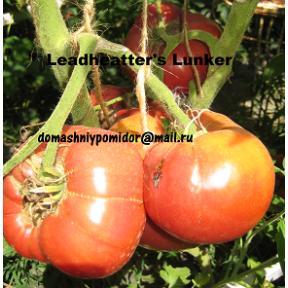 Leadheatter's Lunker
