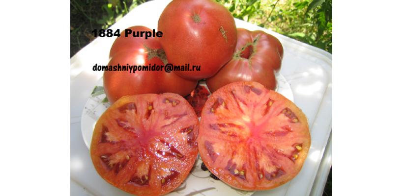 1884 Пурпурный ( 1884 Purple, Канада)