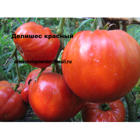 Делишес красный ( Delicious Red, США)